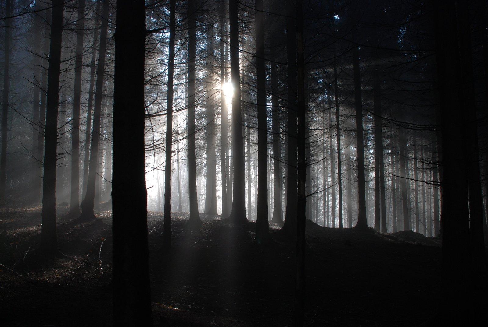 free 黑暗的森林 stock photo图片