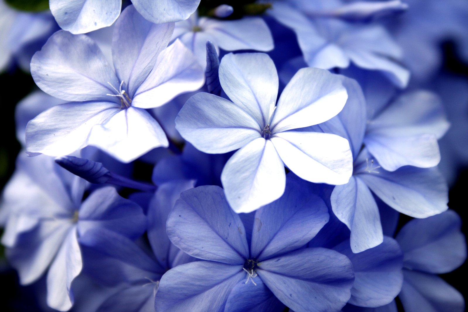 Free purple blue flower images pictures and royalty free stock violet flowers izmirmasajfo Image collections