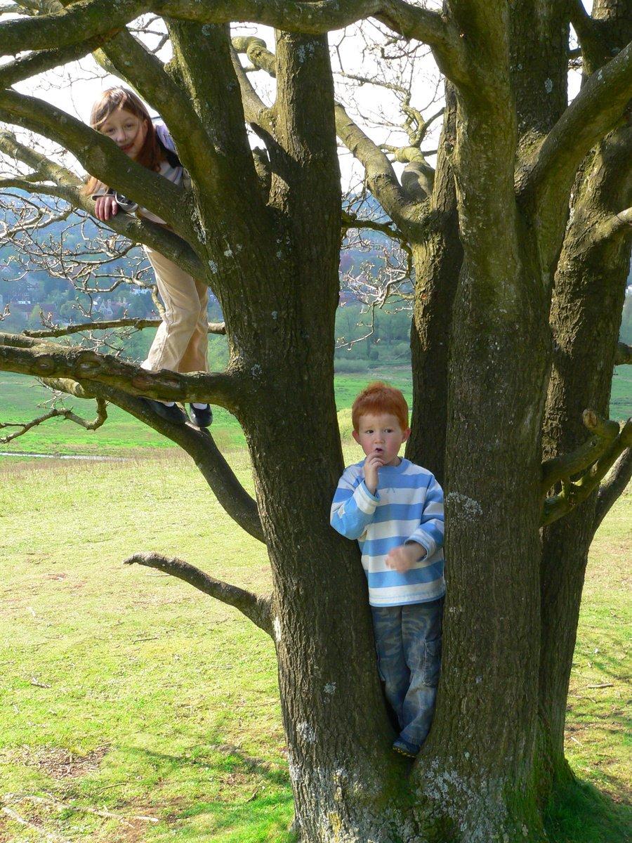 Фото детей на дереве