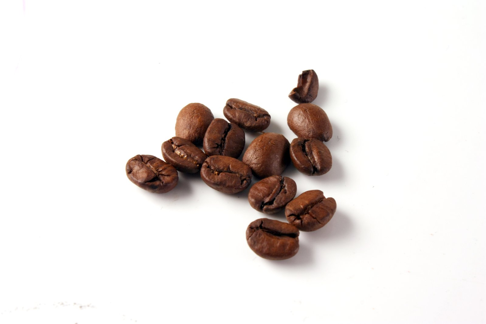 how to grow coffee beans in florida