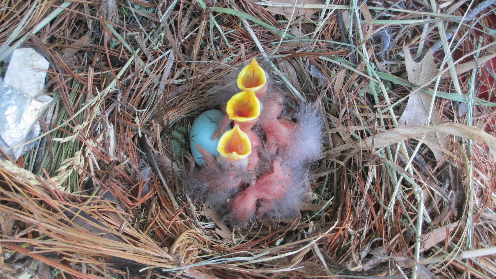 Free Baby birds in Nest Stock Photo - FreeImages.com