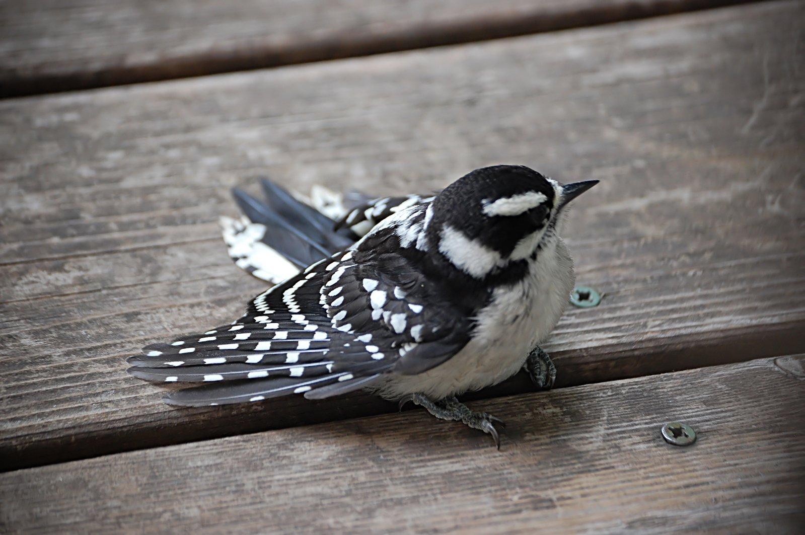 Free Spring Sparrow Stock Photo