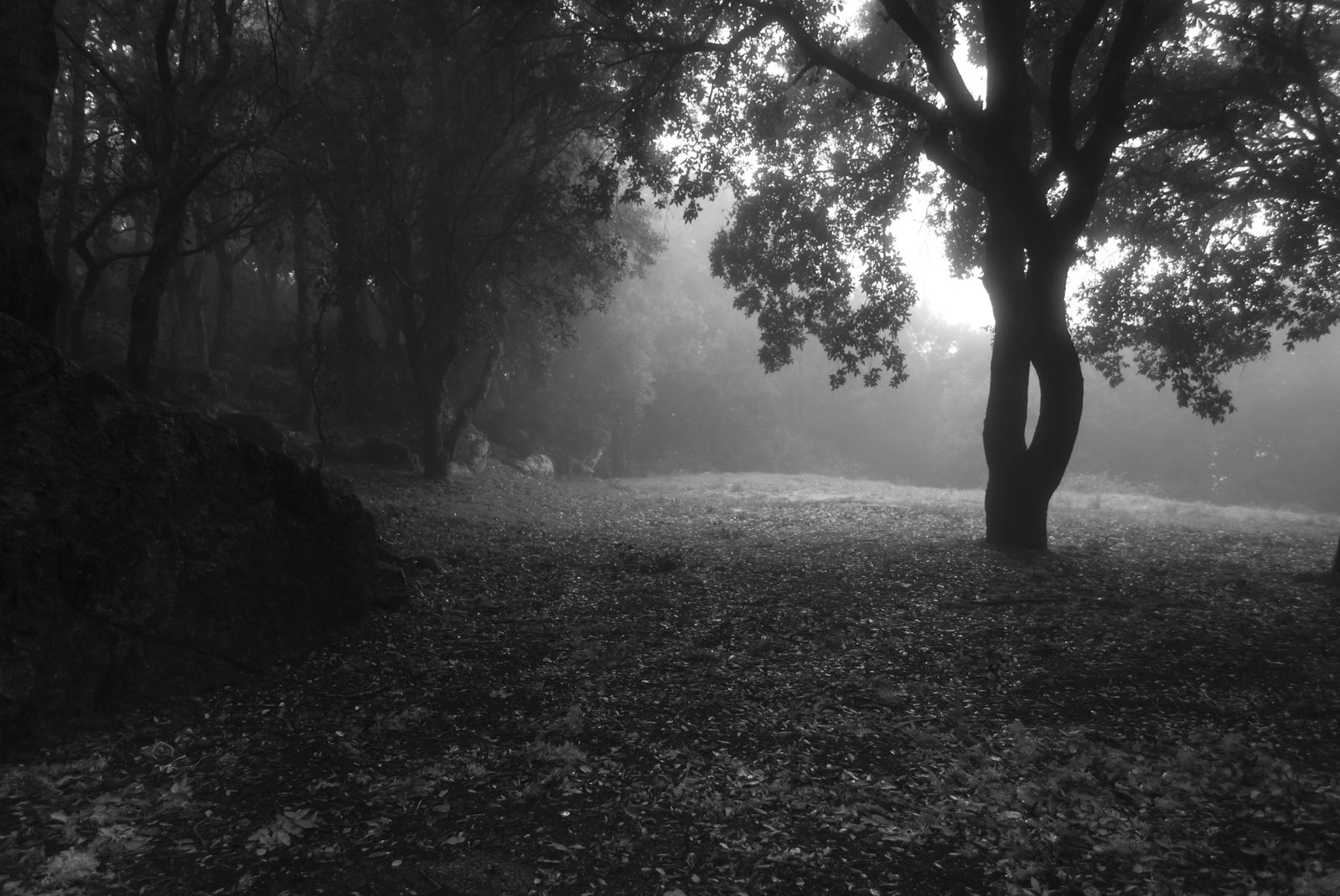 Free Forest In The Twilight 1 Stock Photo Freeimages Com