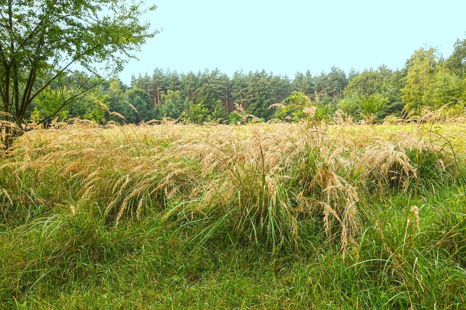 Free wild grass landscape stock photo for Wild grass landscaping