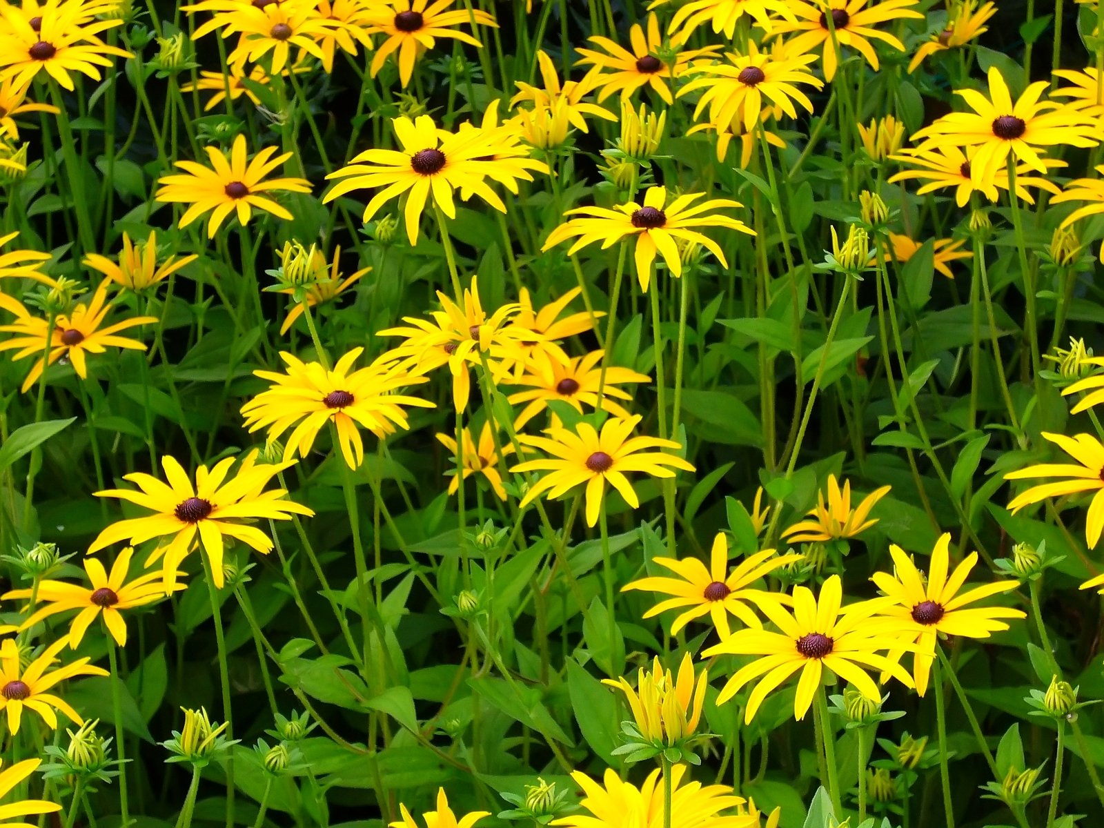 Free yellow flowers stock photo freeimages free yellow flowers stock photo mightylinksfo