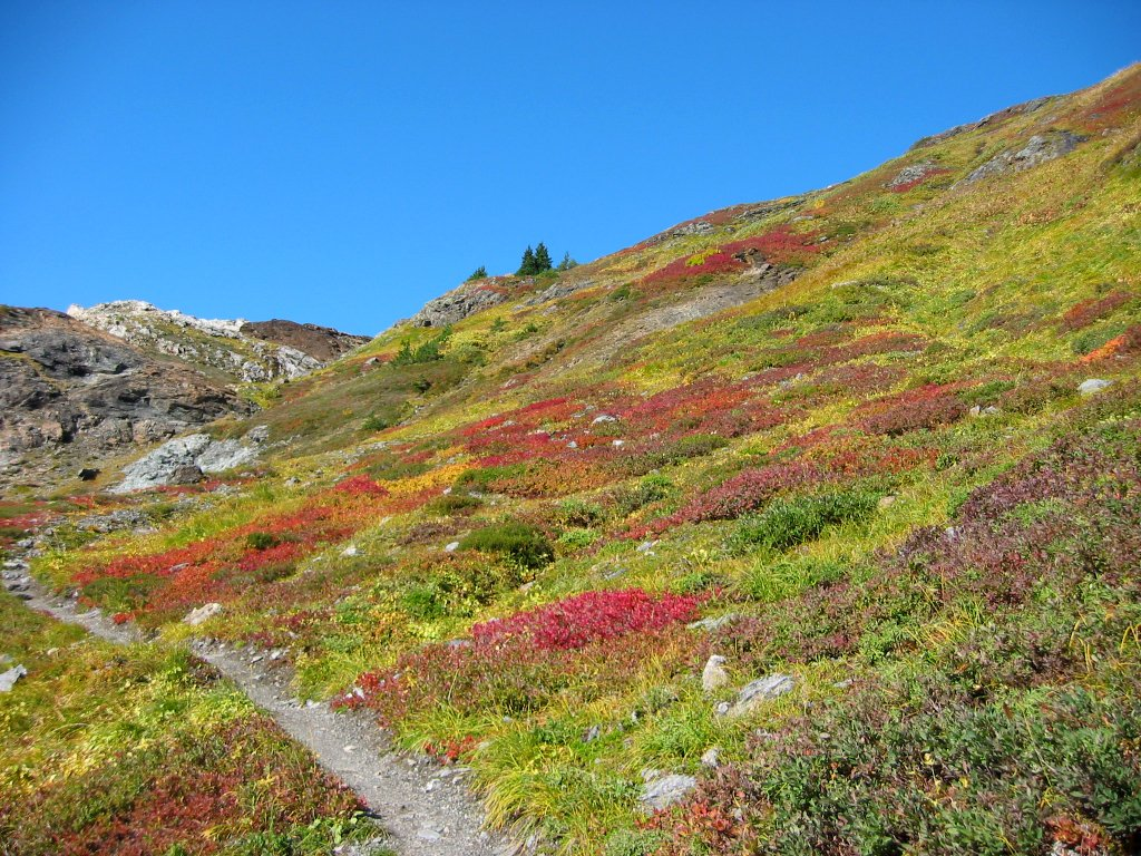Free Colorful Mountain Meadow Stock Photo