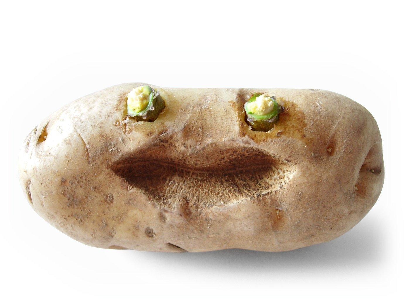 Kostenlose funny potatoBilder und Stockfotografien  FreeImagescom