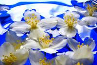 swimming jasmine flowers