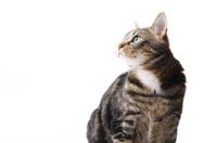 Sitting cat in profile