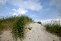 dune at the Dutch coast