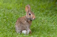 Baby Bunny Rabbit