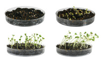 from seed to seedling