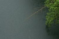 Rain of lake (湖の雨)