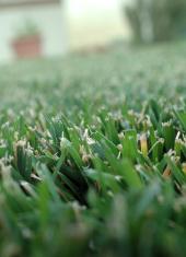Macro shot grass