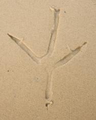 Heron Footprint
