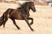 Racehorse Sprinting