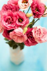 Pink Lisianthus flowers