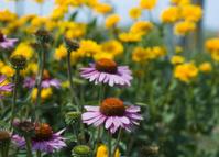 Wild Flowers in Iowa