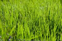 Macro view of green grass