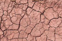 cracked mud pattern