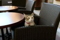Cat-bistro