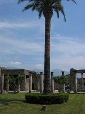 Solo Palm, Pompei, Italia