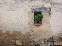 romantic wall flower
