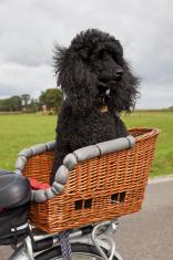 Mobile dog # 3 XXXL