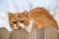 War Torn Cat on Fence
