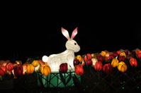 Chinese Mid Autumn Festival Rabbit in Colorful Tulip Sea Lantern