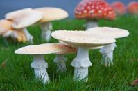 Amanita Mushrooms