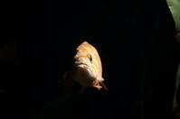 Fish in dark water