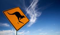 Kangaroo Warning