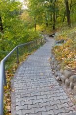 Ladder in autumn park