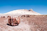 Petrified stump and mesa