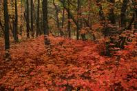 Autumn Fury