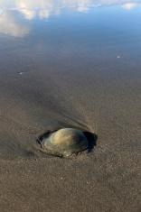 jellyfish drifted ashore