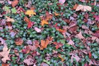Flora in Autumn