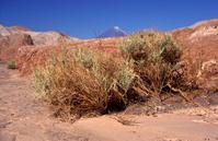 Atacama Desert, dry riverbed