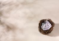 Birds Nest with British Pounds