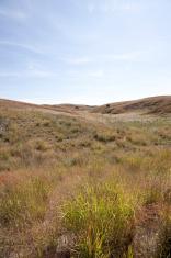 Grassland Series