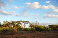 Landscape with Acacia Trees, Kenyan Safari