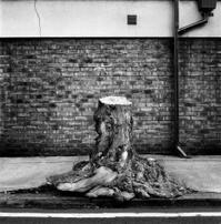 Stump on Street