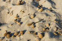 dry seaweed balls on the beach