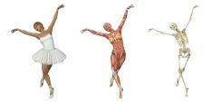 Anatomical Overlays - Ballet