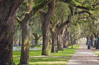 Savannah GA: Emmet Park, Trees and Spanish Moss