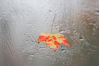Autumn maple leaf on rainy window (XXL)