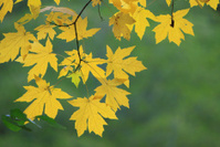 Fall Color in Yosemite Valley