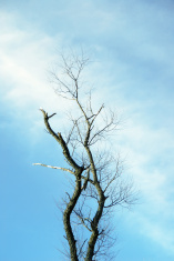 Dead and Bare Trees Rip Through the Sky