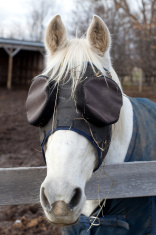 Horse with eye patches